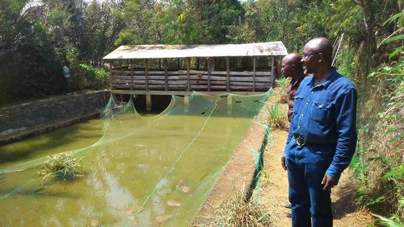 L'agriculture / la pisciculture